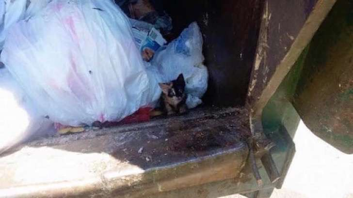Trash-Kitty-2-600x337 2